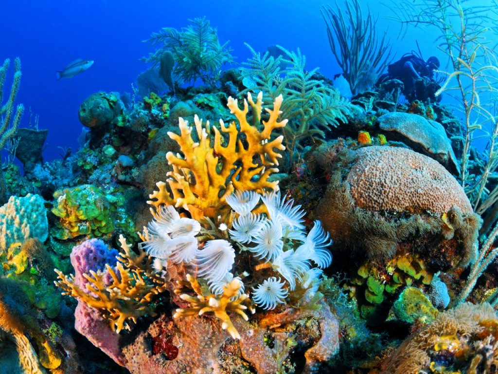 Coral Reefs the Rainforest of the Ocean