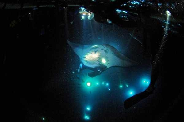 Manta Night Snorkel